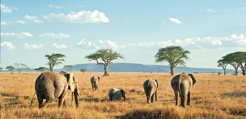 Contratar un Safari