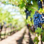 Los 10 Vinos Tintos Más Caros de España